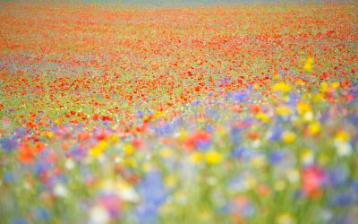 The Colour of Flowers