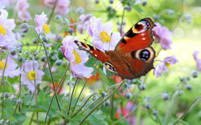 Heart of a Butterfly