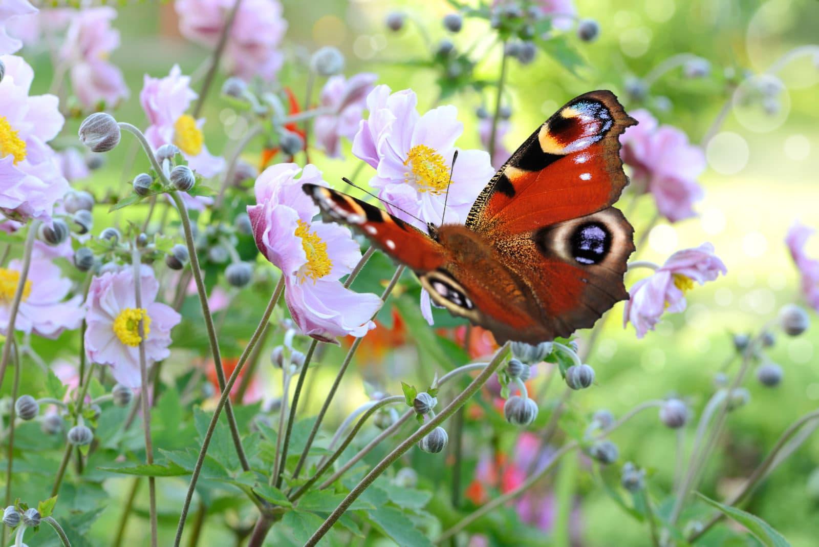 Schmetterling 201