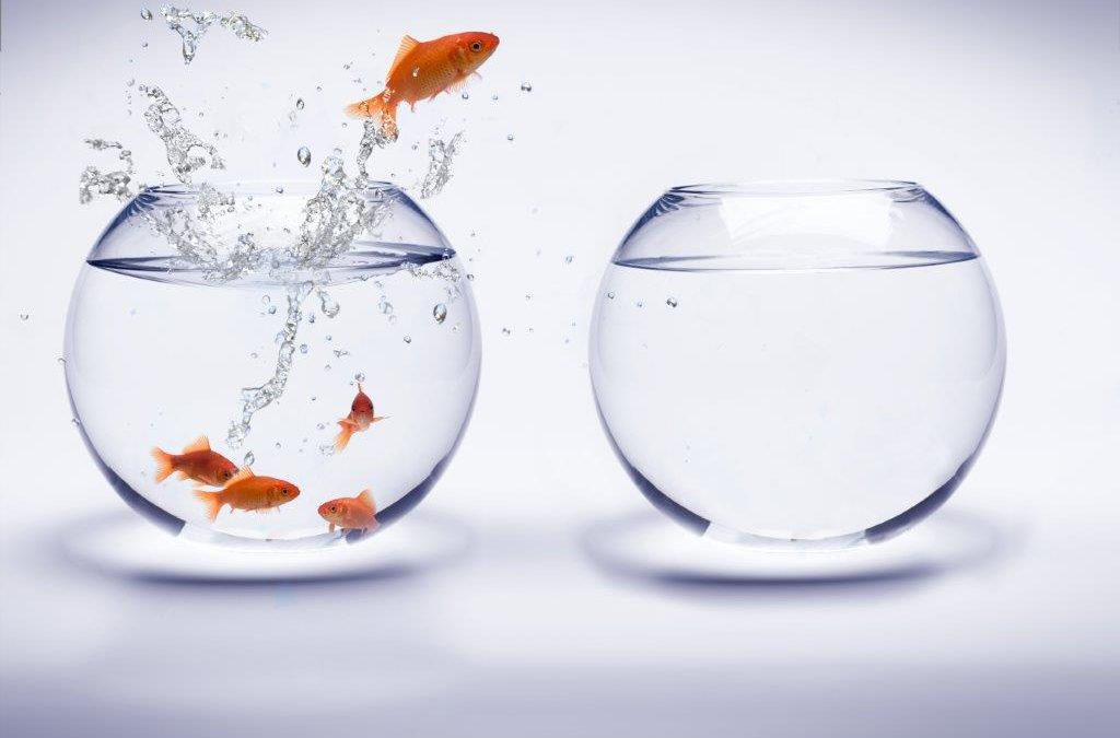 Enthusiasm thought for today for Dream about fish out of water
