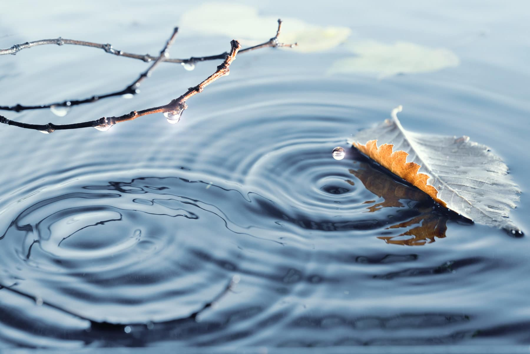 Autumn leaves on rippled water surface