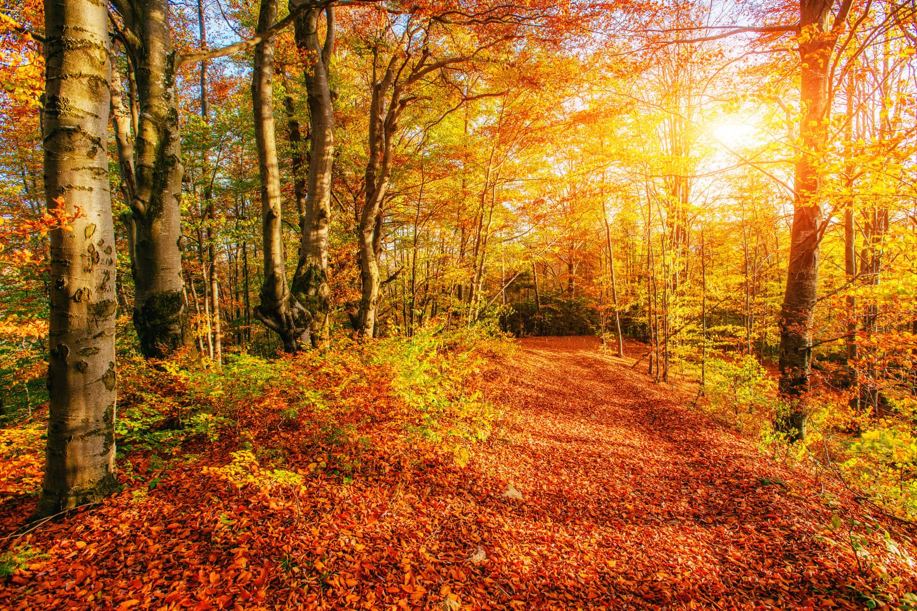 Forest Road in the autumn. Beauty world. Landscape